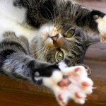 Cat Declaw