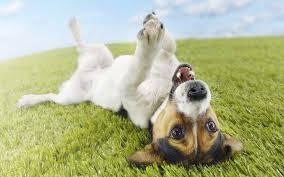 Spay a Dog